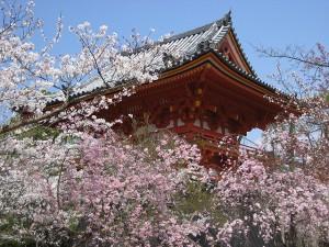 """Indahnya """"Shiki"""", yaitu 4 Musim di Jepang"""