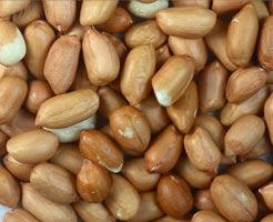 Kacang yang Dipanggang Dapat Memicu Alergi