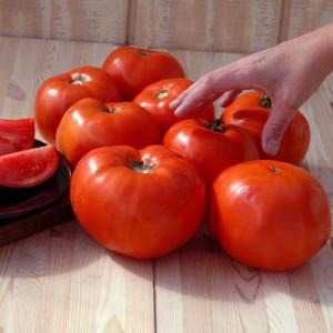 Kandungan Gizi dan Komposisi dari Tomat Merah